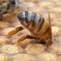 med-hned.eu – prodej medu přímo od včelaře ze dvora.
